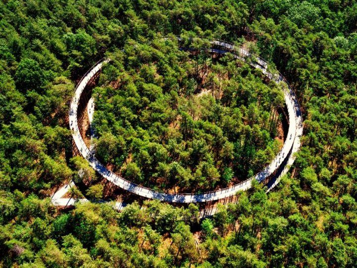 Cycling through trees.jpg