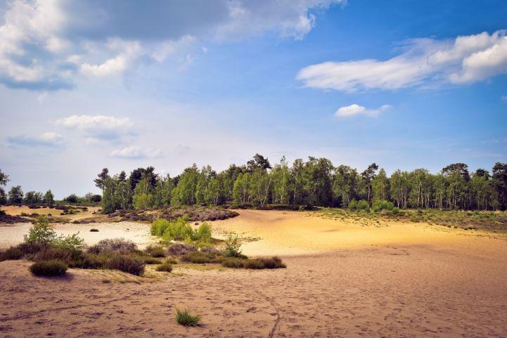 De Maasduinen National Park, the Netherlands