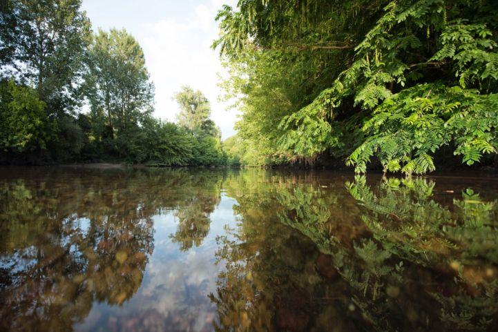 Réserve naturelle de Kühkopf-Knoblochsaue, Allemagne