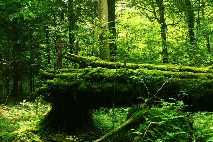 Die Artenvielfalt des Białowieża-Waldes